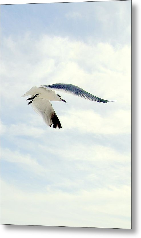 Gulls Metal Print featuring the photograph Journey by George I Perez