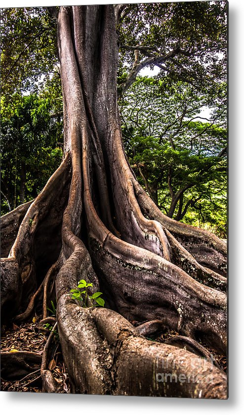 Hawaii Metal Print featuring the photograph Jurassic Park Tree Roots by Blake Webster