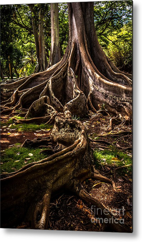Hawaii Metal Print featuring the photograph Jurassic Park Tree Trailing Root by Blake Webster