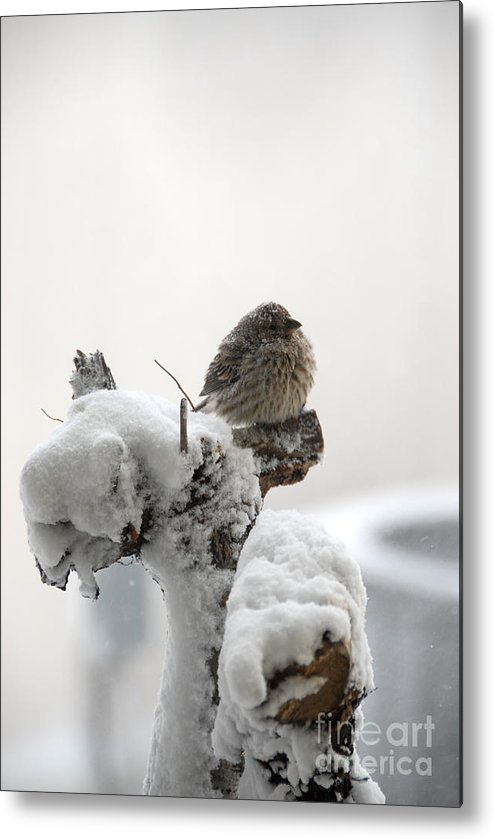 Winter Snow Metal Print featuring the photograph Let It Snow by Bill Hyde