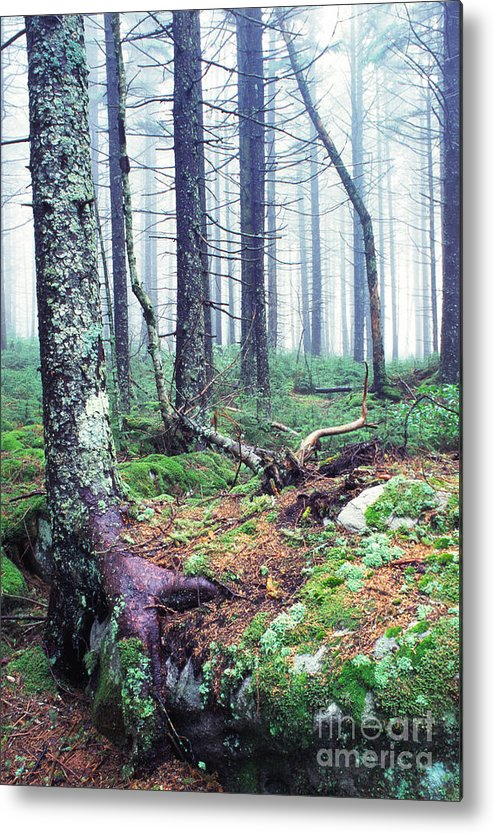 Usa Metal Print featuring the photograph Misty Forest Gaudineer Scenic Area by Thomas R Fletcher
