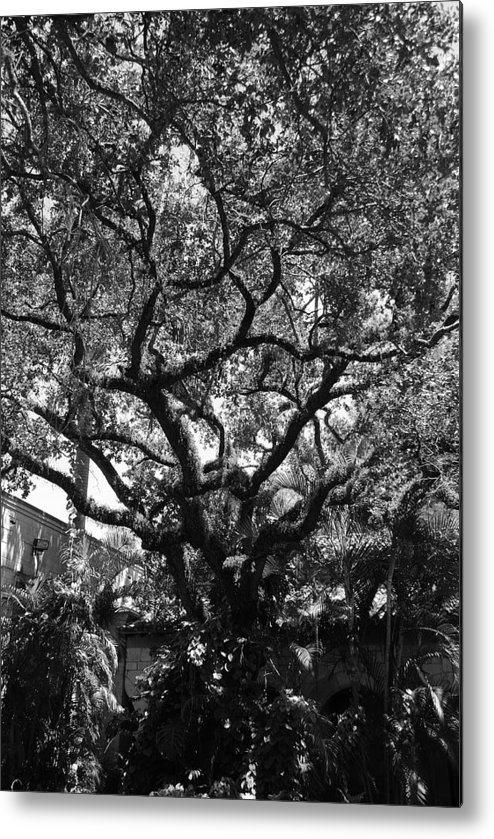 Black And White Metal Print featuring the photograph Monastery Tree by Rob Hans
