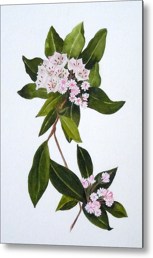 Mountain Laurel Metal Print featuring the painting Mountain Laurel by Jean Blackmer