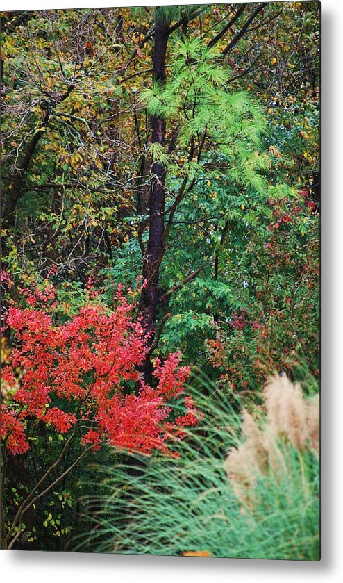 Trees Metal Print featuring the photograph Nature In All Her Beauty by Trudi Southerland