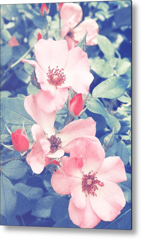 Roses Metal Print featuring the photograph Pinks by Jackie Farnsworth