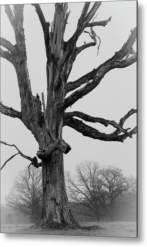 Landscape Photography Metal Print featuring the photograph Tree Study by David Waldrop