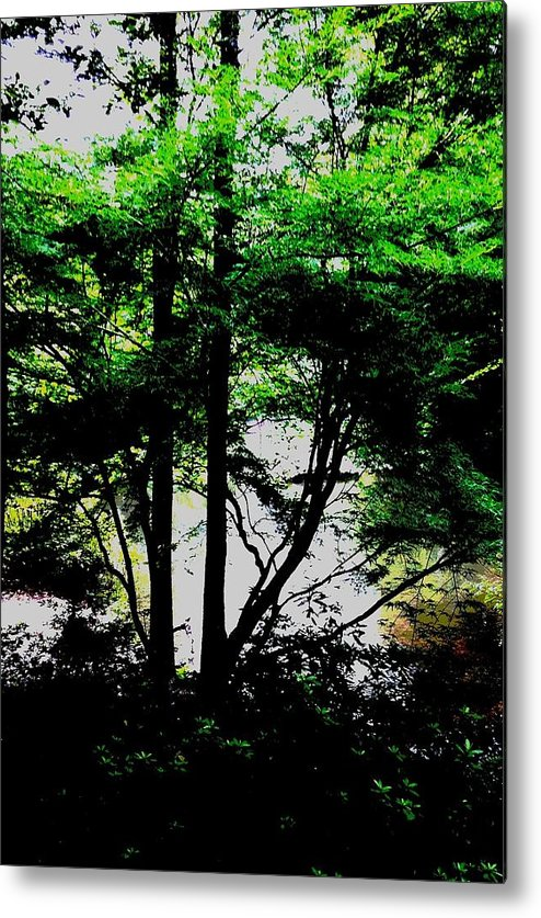Landscape Trees Greenery Metal Print featuring the photograph Trees Of Spring by Deb Schneider