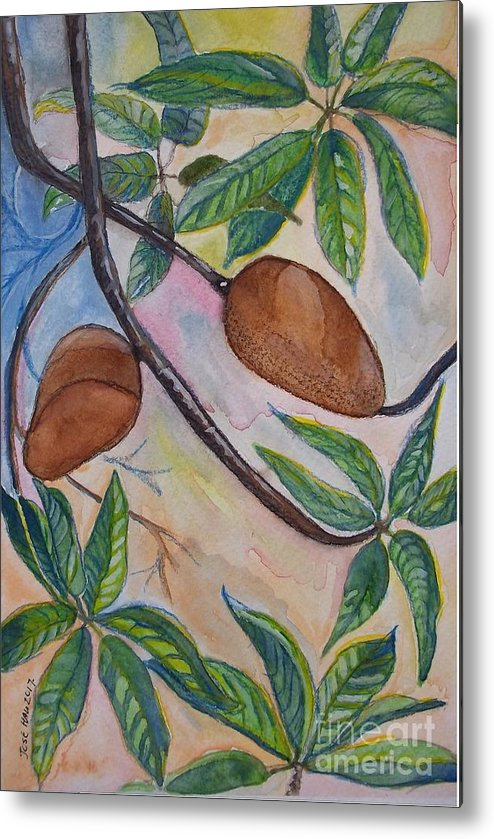 Fruit Metal Print featuring the painting Tropical Fruit Mamey by Jose Hau
