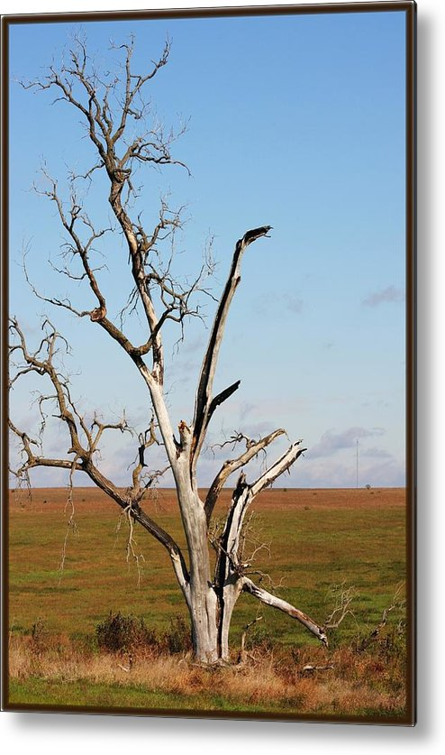 Tree Metal Print featuring the photograph Weathered by Jim Darnall