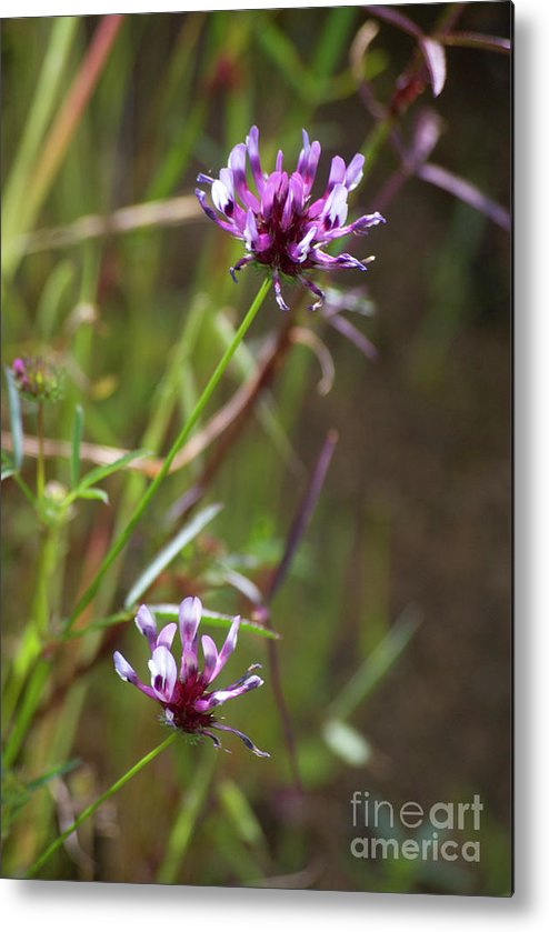 Pink Metal Print featuring the photograph Wildflowers by Jim And Emily Bush