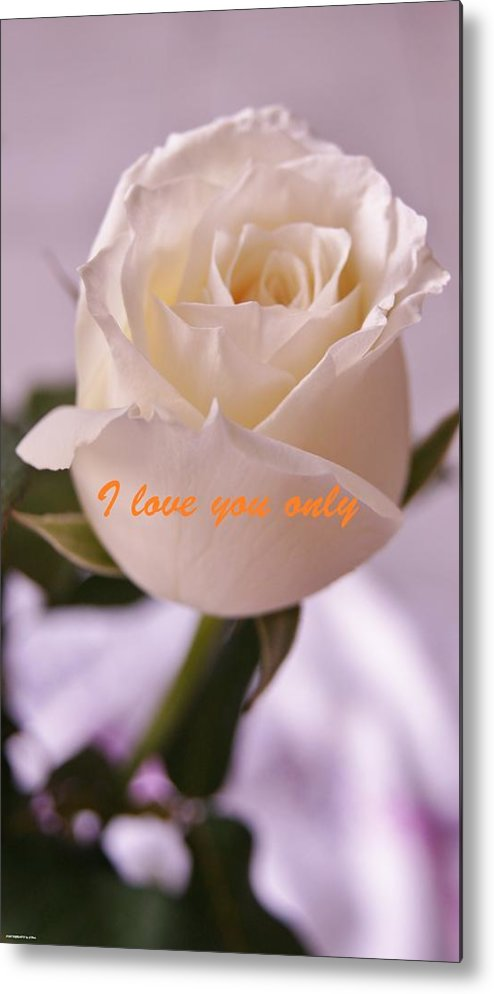 Metal Print featuring the photograph Rose For You by Gornganogphatchara Kalapun