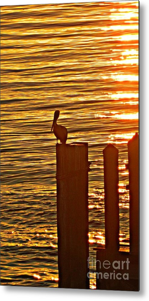 Pelican Metal Print featuring the photograph Late For Dinner by Jennifer Boisvert
