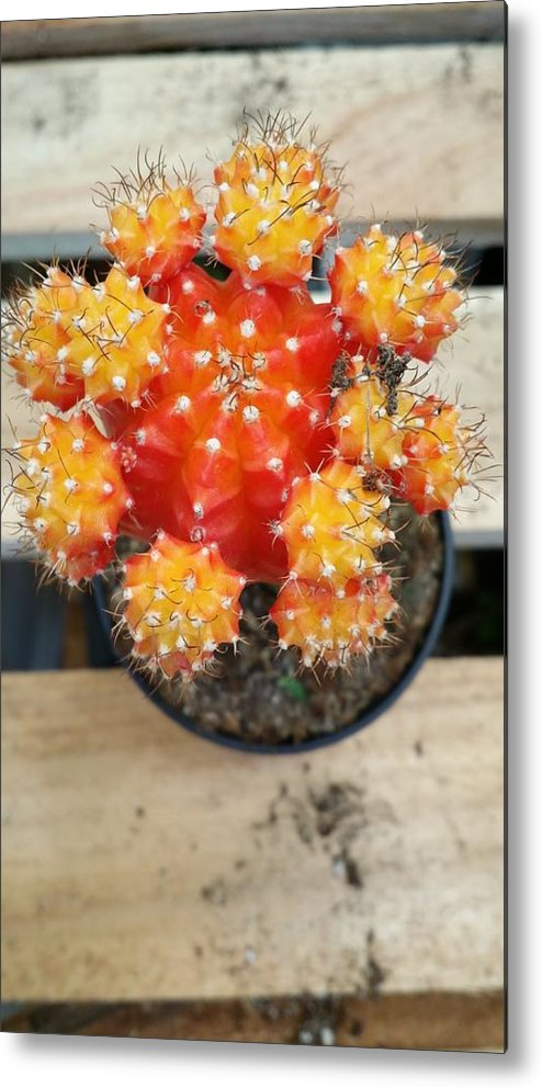 Still Life Metal Print featuring the photograph Cactus Orange by Mark Victors