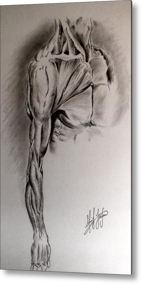 Leonardo Da Vinci Arm Anatomy Study Metal Print by Sherif Hakeem