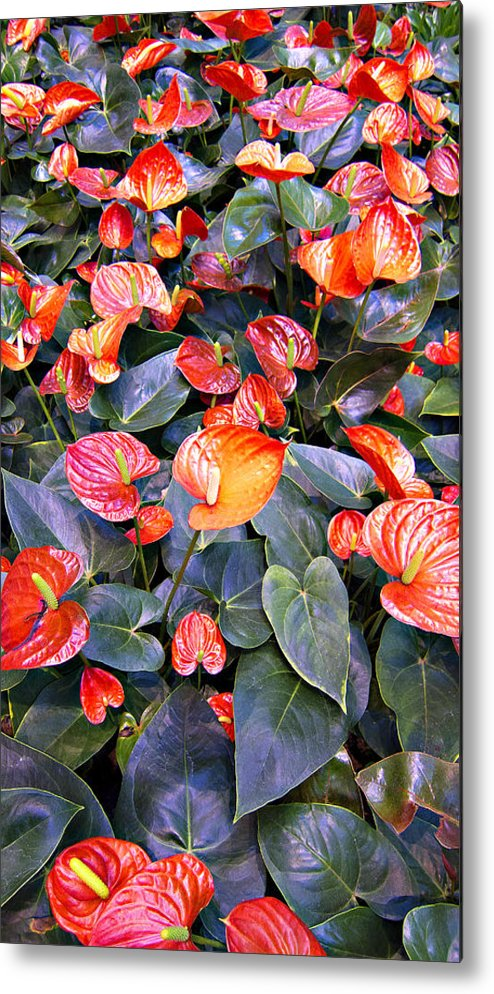 Flamingo Flower Bed Metal Print featuring the photograph Flamingo Flower Bed by Douglas Barnard