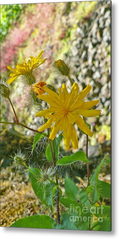Flowers Metal Print featuring the photograph Fuzzy by Larry Keahey