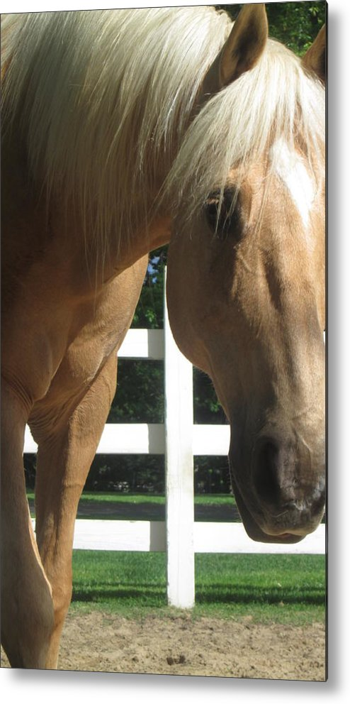Horse Metal Print featuring the photograph Palimino Pal by Julie Houle