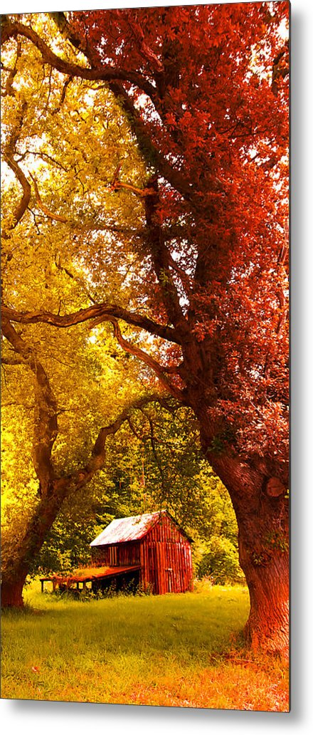 Forest Metal Print featuring the photograph Cosy Shed by Svetlana Sewell