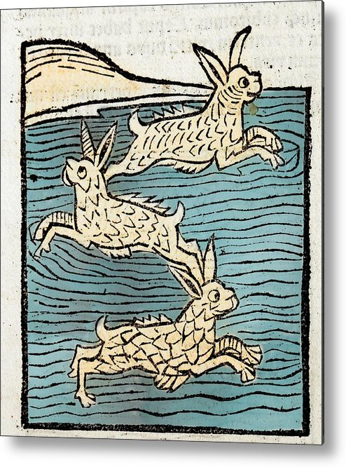 15th Century Metal Print featuring the photograph 1491 Sea Hares From Hortus Sanitatis by Paul D Stewart