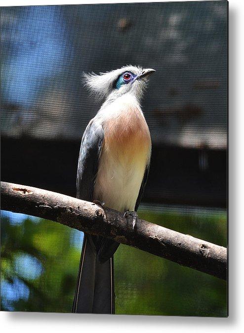 Birds Metal Print featuring the photograph Blue Eyed Bird by Joe Bledsoe