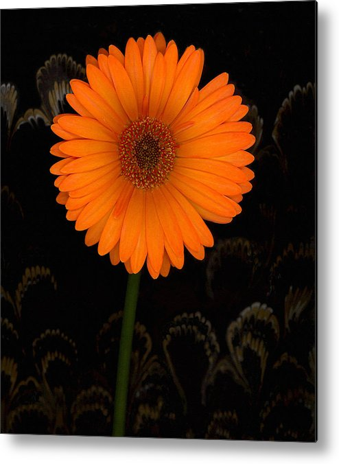 Gerbera Daisy Metal Print featuring the photograph Standing Tall by Suzanne Gaff