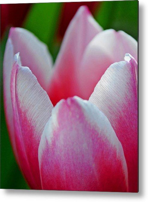 Tulip Metal Print featuring the photograph Deluscious by Melanie Moraga