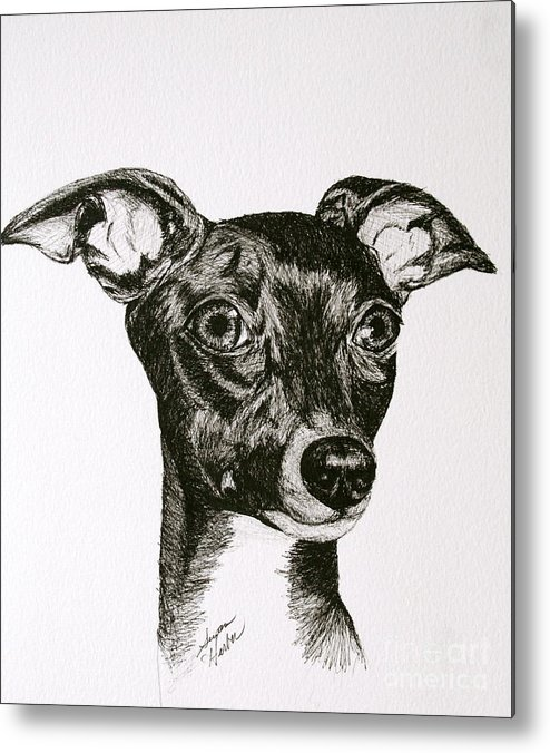 Ig Metal Print featuring the drawing Italian Greyhound by Susan Herber