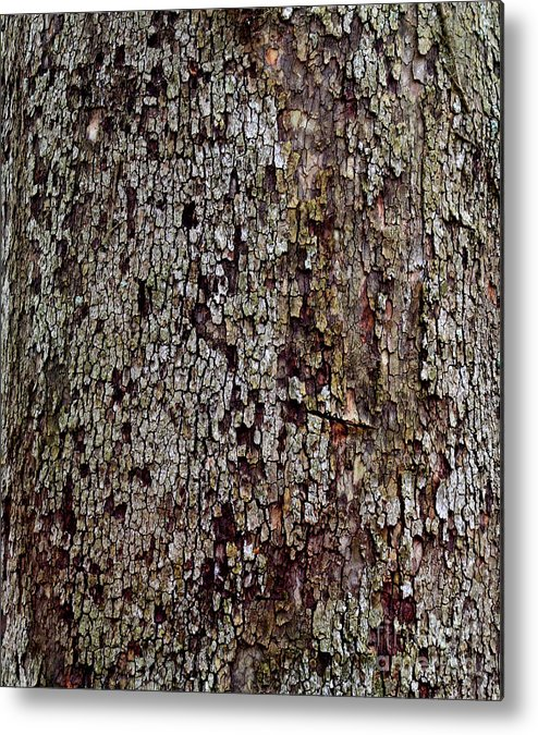 Natural Metal Print featuring the photograph Bark by Karen Adams