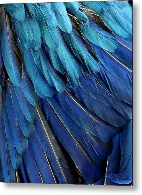 Feather Metal Print featuring the photograph Feathered by Joe Bonita