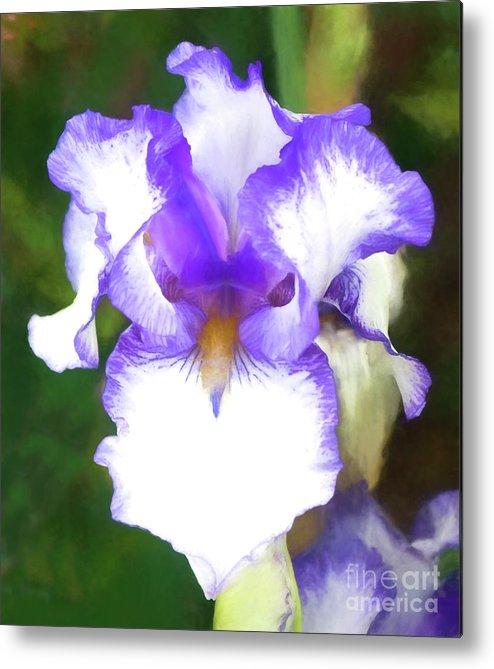 Iris Metal Print featuring the photograph Purple And White Iris by Jim And Emily Bush