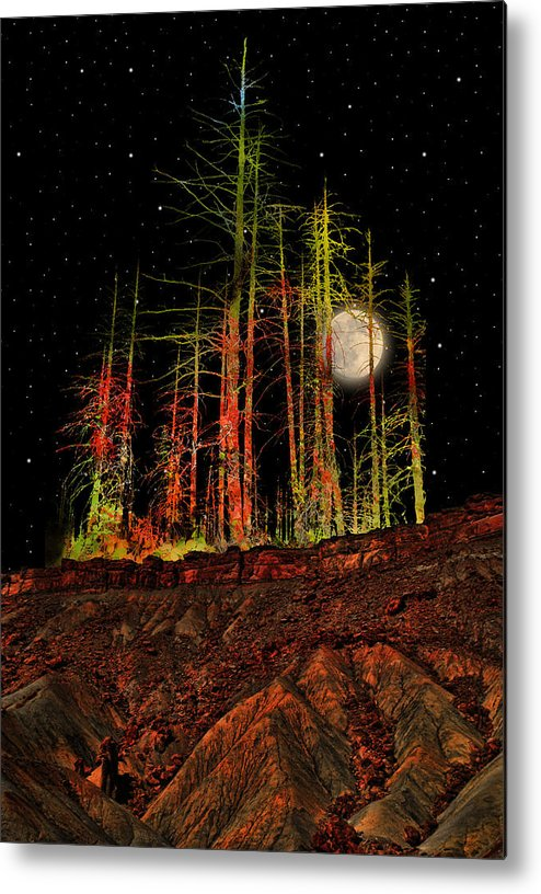 Trees Metal Print featuring the photograph 2806 by Peter Holme III