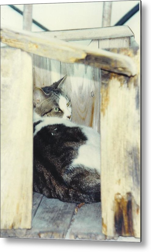 Framed By A Box Metal Print featuring the photograph Emmie by Robert Floyd