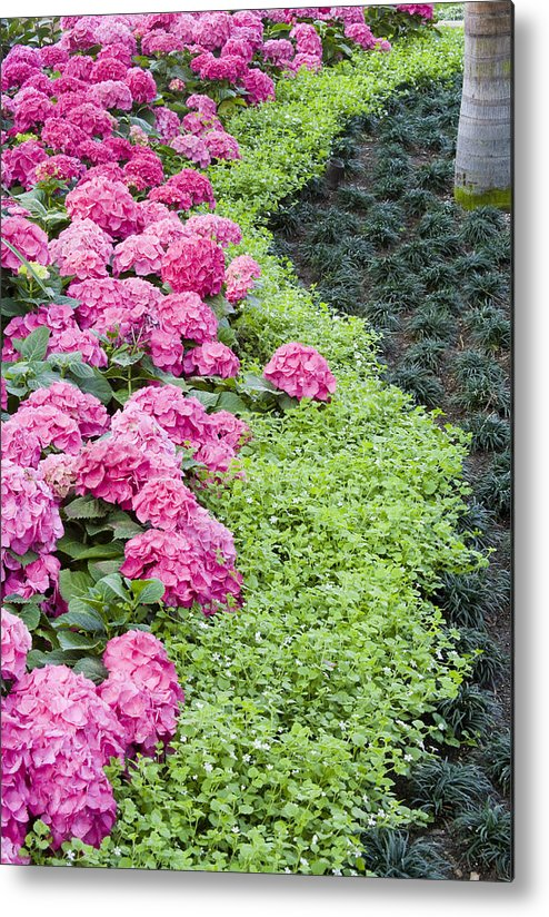Border Metal Print featuring the photograph Floral Curves by Eggers Photography