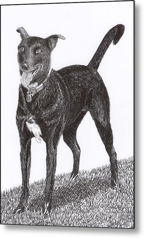 Priced Starting At $ 100.00 To $ 125.00 Framed Prints Of Man�s Best Friend. Framed Pen & Ink Art Of Winer Dogs. Ink Art Of Pets. Art Of Dogs And Cats.sue's Dog Drawn In Pen & Ink. Metal Print featuring the drawing Here Is Once Own See by Jack Pumphrey