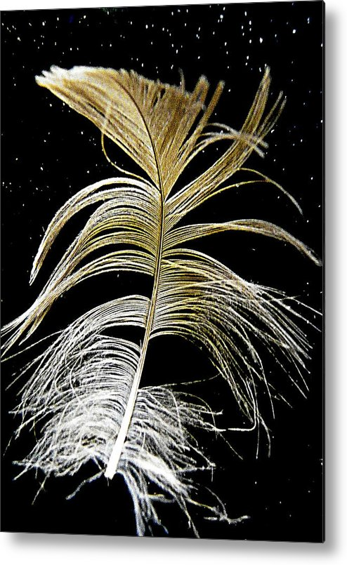 Feather Metal Print featuring the photograph Space Feather by Constance Jackson