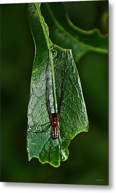 Macro Metal Print featuring the photograph Spider - Waiting 001 by George Bostian