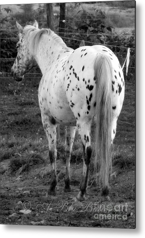 Appaloosa Metal Print featuring the photograph Waiting by Ann Butler