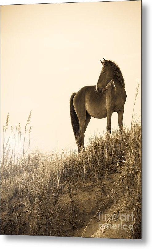 Horse Metal Print featuring the photograph Wild Horse On The Beach by Diane Diederich