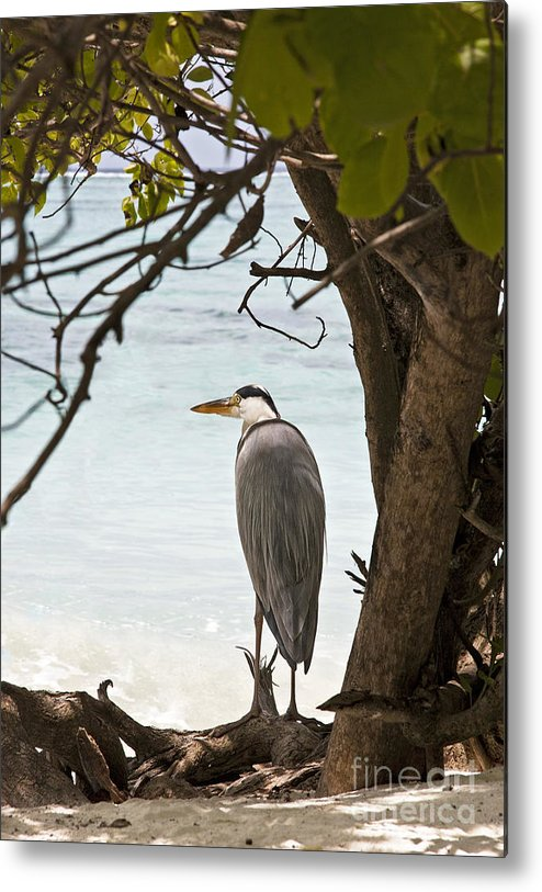 Alone Metal Print featuring the photograph Heron by Jane Rix