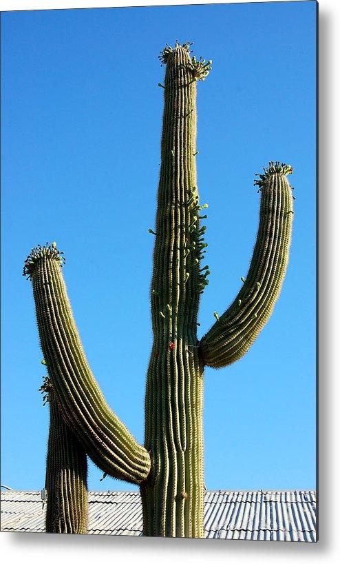 Saguaro Metal Print featuring the photograph Saguaro by Heather S Huston