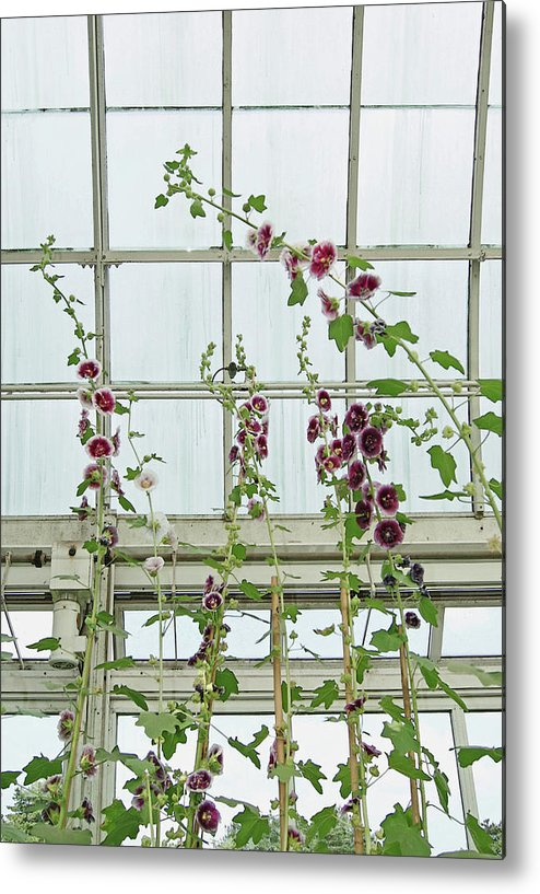 Flowers Metal Print featuring the photograph A Garden Greenhouse by Margie Avellino
