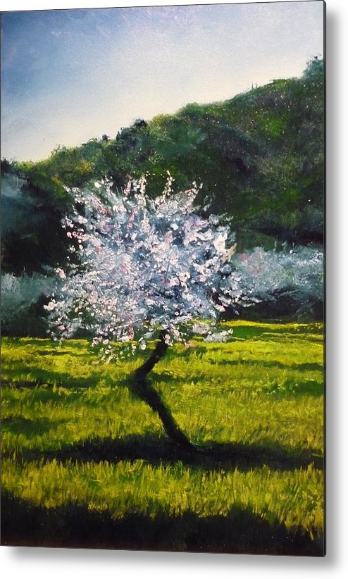 Almond Tree Metal Print featuring the painting Almond Tree In Blossom by Lizzy Forrester