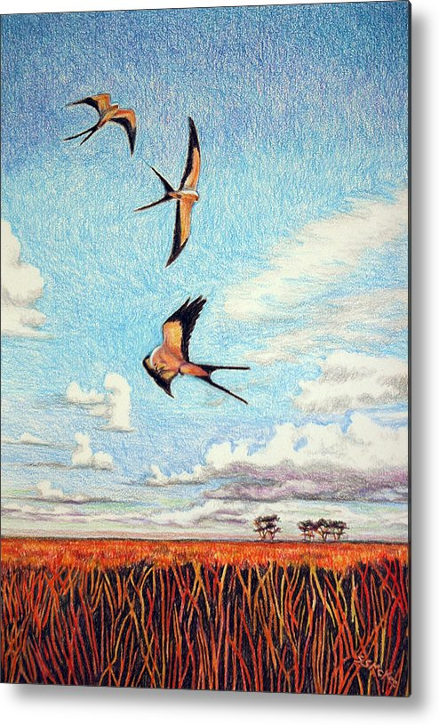 Color Pencil Metal Print featuring the drawing Bayou Ballet by Suzanne McKee