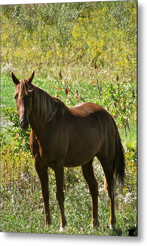 By Myself Metal Print featuring the photograph By Myself by Debra   Vatalaro