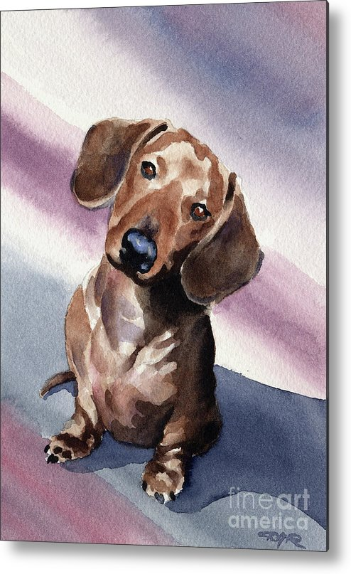 Dachshund Metal Print featuring the painting Dachshund by David Rogers