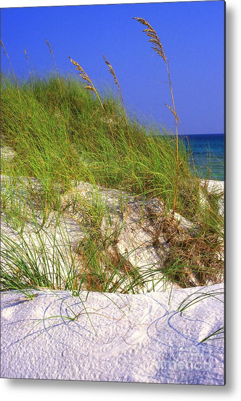 Florida Metal Print featuring the photograph Dunes Trail The Emerald Coast by Thomas R Fletcher