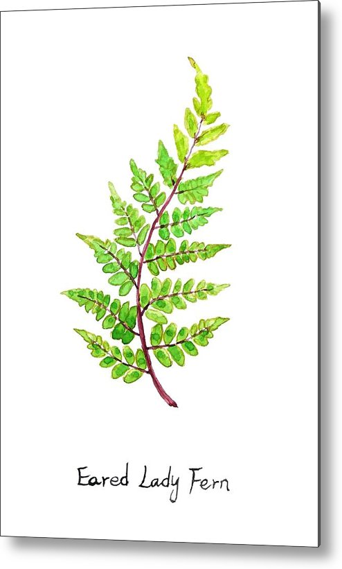 Watercolor Painting Metal Print featuring the painting Eared Lady Fern by Color Color