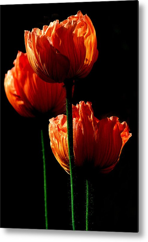 Photograph Metal Print featuring the photograph Elegance by Stephie Butler