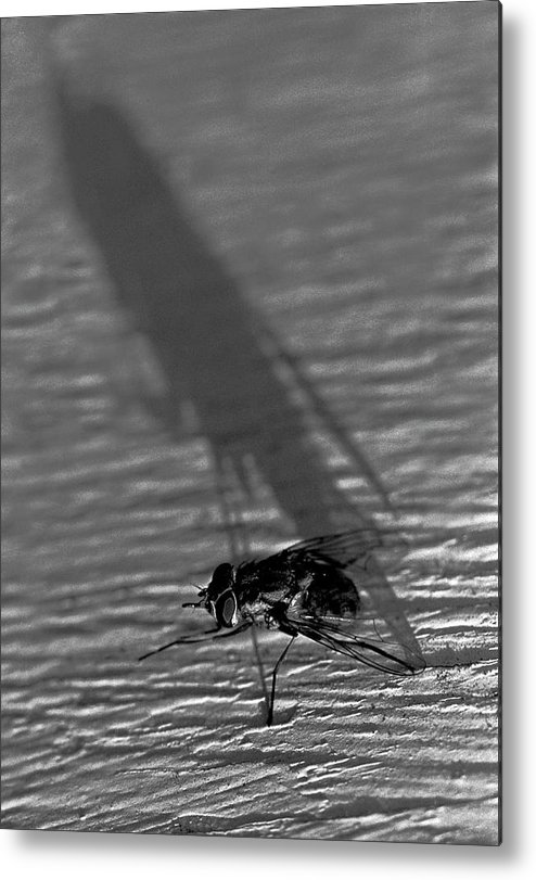 Fly Metal Print featuring the photograph Fly On The Wall by BuffaloWorks Photography