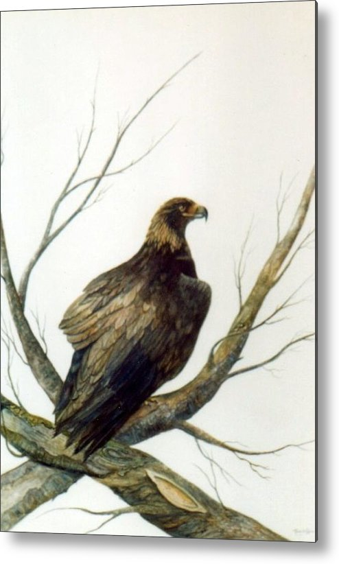 Eagle Metal Print featuring the painting Golden Eagle by Ben Kiger
